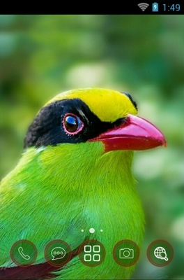 android theme 'Green Magpie'