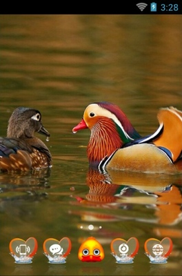 android theme 'Wood duck'