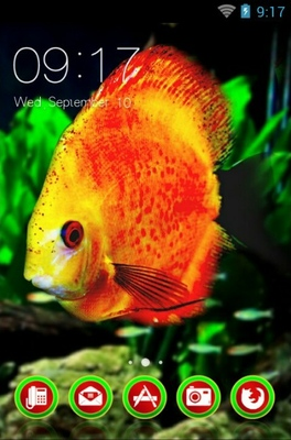 android theme 'Symphysodon Discus'
