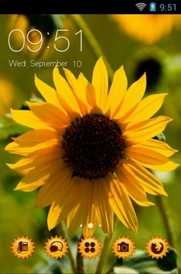 android theme 'Helianthus Annuus'