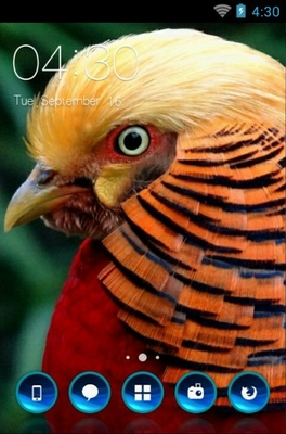 android theme 'Golden Pheasant Bird'