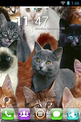 Cute Cats android theme